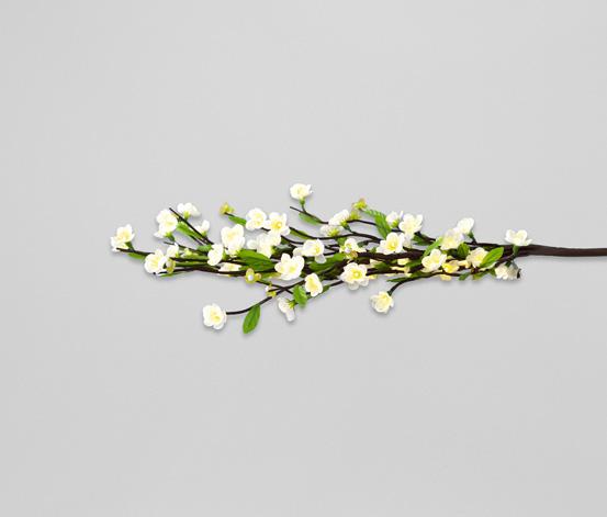 Świecąca gałąź wiśni