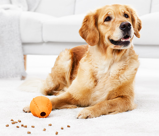 Jouet à snack pour chien