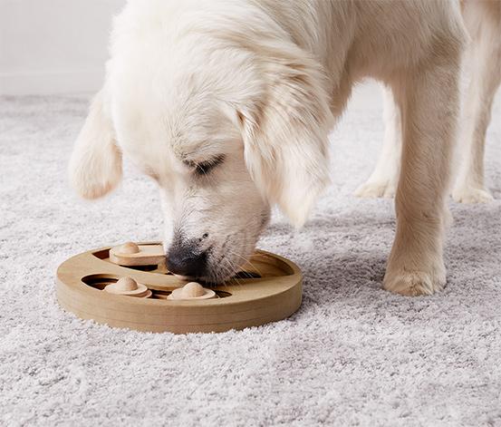 Intelligenciafejlesztő kutyajáték