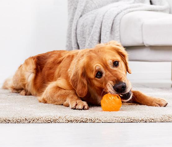 Bissfester Hundeball