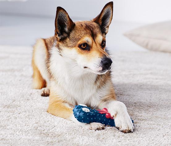 Hunde-Spielzeug, Knochen
