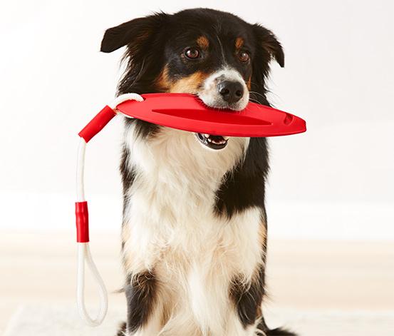 Hunde Wasserspielzeug online bestellen bei Tchibo 361707