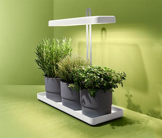 Minizahrádka s LED