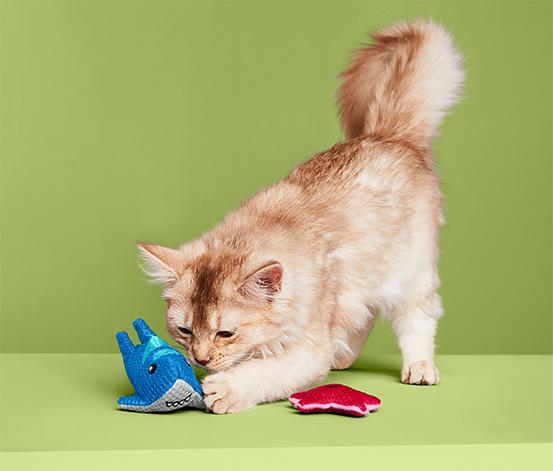 Kedi Diş Bakımı Oyuncağı