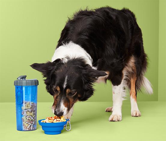 Kit d'accessoires à emporter pour nourrir les animaux