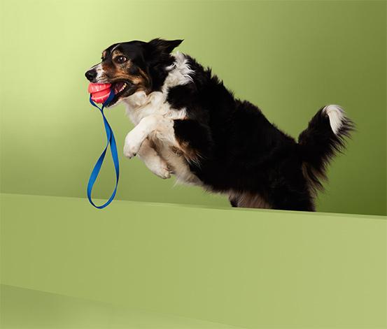 Vrhací hračka pro psy