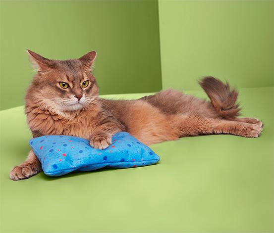 Kedi Yastığı