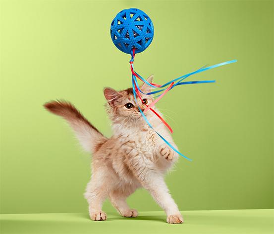 Sesli Kedi Oyuncağı