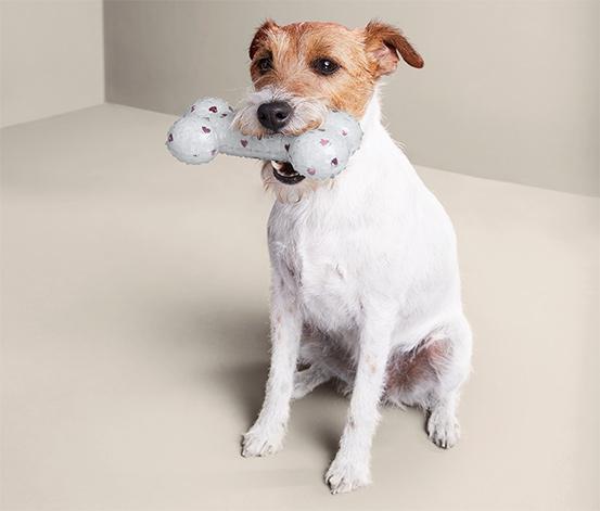 Zabawka piszczałka dla psa