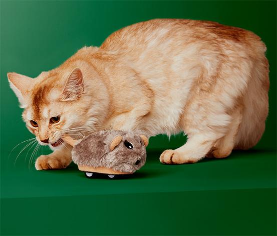 Myš na hranie pre mačky, na diaľkové ovládanie