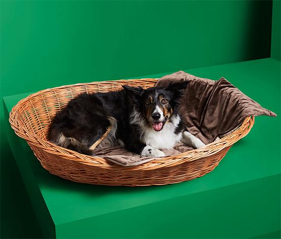 Puha takaró kutyáknak