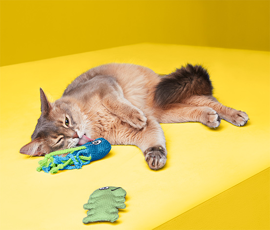 Zabawki do pielęgnacji zębów kota, 2 sztuki