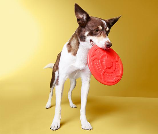 Hunde-Wurfscheibe