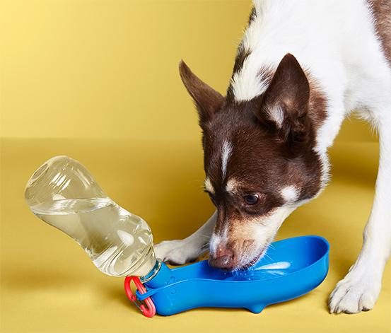 Taşınabilir Köpek Şişesi