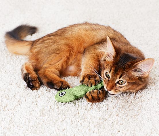 Neon Mavi Yeşil Kedi Diş Temizleme Oyuncağı