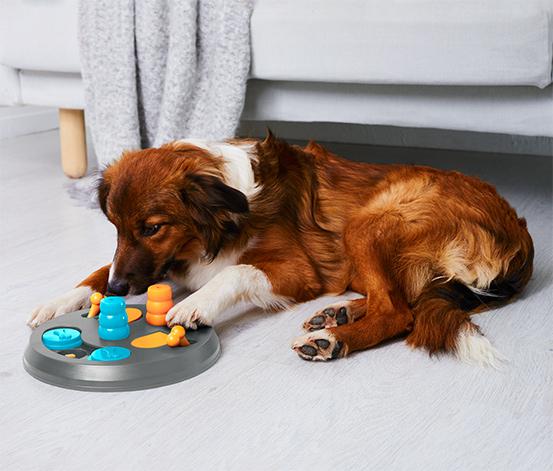 Turuncu Köpek Zeka Oyuncağı