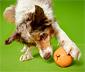 Jutalomfalat-adagoló kutyajáték, körte
