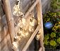 Dekoracyjny, solarny łańcuch świetlny w kształcie żarówek
