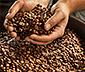 Barista Caffè Crema – 1 kg hela bönor