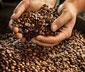 Caffè Crema Mild, 1 kg, kawa w ziarnach