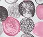 Női sál, pöttyös, szürke/rózsaszín