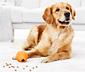 Zabawka-piłka dla psa z przekąskami