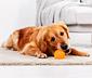 Balle résistante pour chien