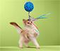 Szeleszcząca zabawka dla kota