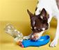Bidon z miską dla psa na drogę