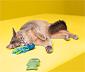 2 fogápoló játék macskáknak szettben, hal/polip
