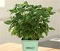 Greenbar »Küchenkräuter«-Nachfüllset